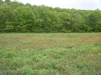 Field_behind_our_house